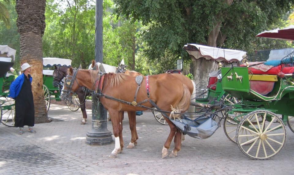Top Ways to Get Around in Marrakech