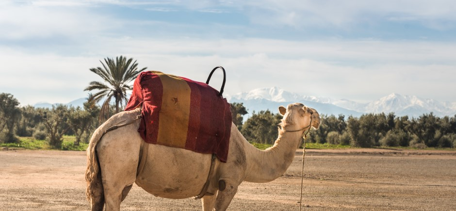 5 Top Things for Families to do in Marrakech